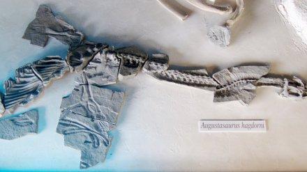 augustasaurus_hagdorni